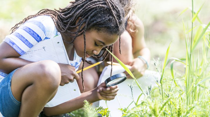A multi-ethnic group of elementary school children are outdoors on a sunny day. They are wearing casual clothing. They are learning about nature in science class. A girl of African descent is using a magnifying glass to look for bugs.